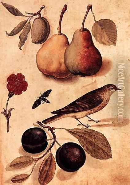Specimens of Nature Oil Painting - Ulisse Aldrovandi