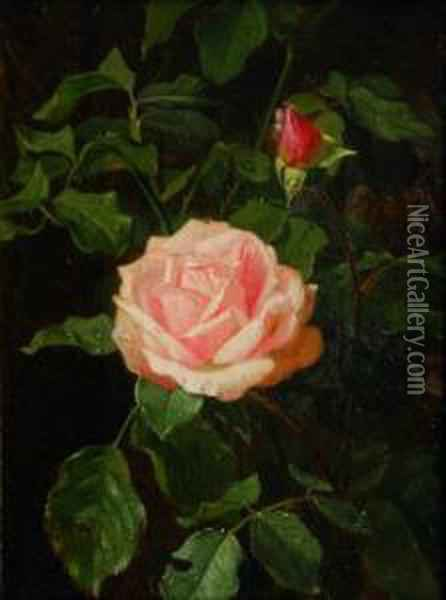 Rose Oil Painting - Clara Von Sivers
