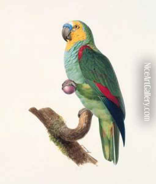 Amazone A Front Bleu, Male -  Blue-fronted Amazon, Male - Amazona Aestiva. Native To South America. Oil Painting - Jacques Barraband