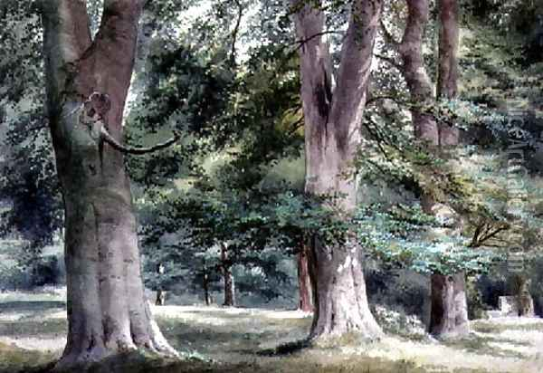 Study of Beech Trees Oil Painting - Thomas Collier