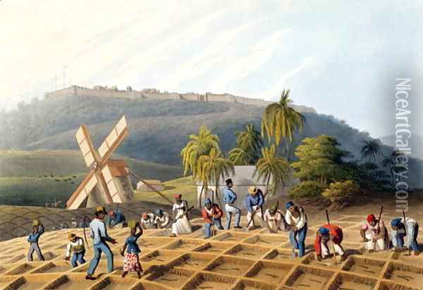 Slaves Planting Cane Cuttings, from 'Ten Views in the Island of Antigua', 1823 Oil Painting - William Clark