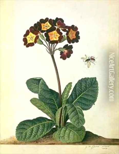 Primulaecae a Flowering Polyanthus with a Flying Insect Oil Painting - Georg Dionysius Ehret