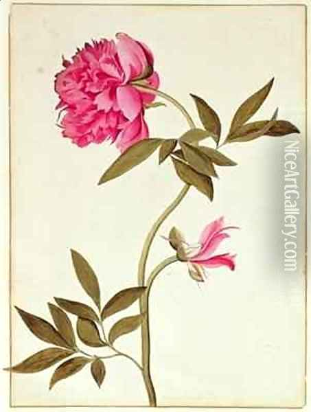 Rose Peony Oil Painting - George Edwards