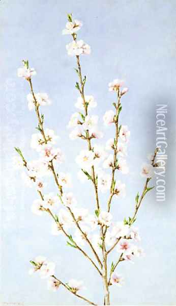 Peach Blossoms Oil Painting - John William Hill