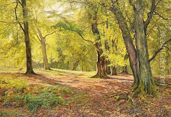 In the Beechwoods Oil Painting - William Samuel Jay