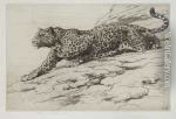 Leopard Oil Painting - Herbert Thomas Dicksee