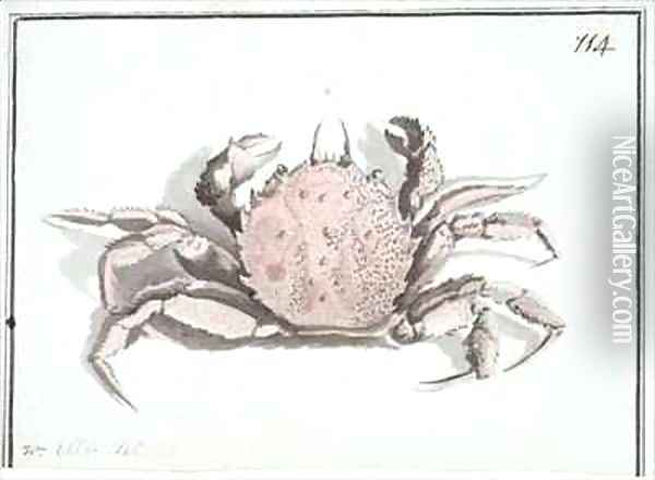 f114 Crab Erimacrus isenbeckii Oil Painting - William Ellis
