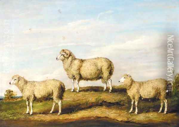 A Dartmoor Ram, Ewe And Wether Oil Painting - James Ward