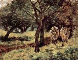 Two oxen in the olive grove