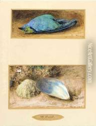 Still life of a dead bird; and Still life of two shells on a mossy bank
