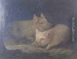 Two Prize Pigs in an Interior
